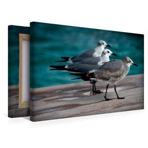 Premium Textil-Leinwand 45 cm x 30 cm quer Möwen Trio