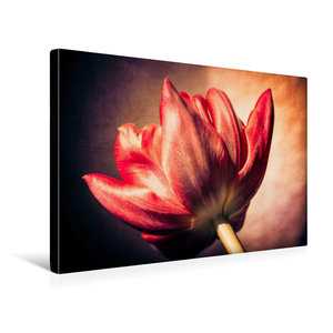 Premium Textil-Leinwand 45 cm x 30 cm quer Tulpenblüte, rot