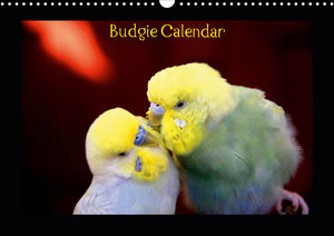 Budgie Calendar - UK Version