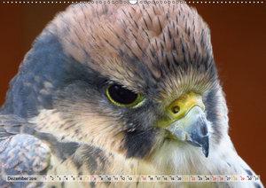 Majestätische Greifvögel (Wandkalender 2019 DIN A2 quer)