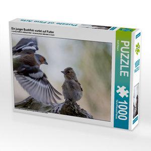 Ein junger Buchfink wartet auf Futter 1000 Teile Puzzle quer