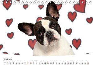 Bullys - Französische Bulldoggen 2019 (Tischkalender 2019 DIN A5