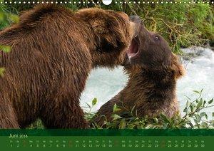 Der Bärenkalender 2018 CH-Version