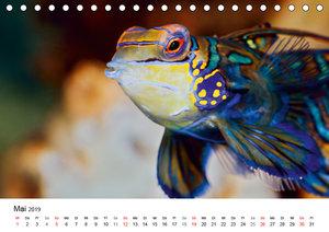 Fischzauber - Wundervolle Aquarienfische (Tischkalender 2019 DIN