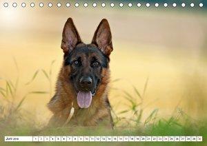 Deutscher Schäferhund Yack ? Auf dem Weg zum Teenager