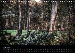 Mystische Wälder (Wandkalender 2019 DIN A4 quer)