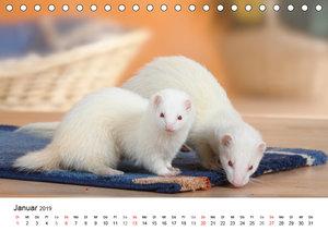 Mit niedlichen Heimtieren durch das Jahr (Tischkalender 2019 DIN