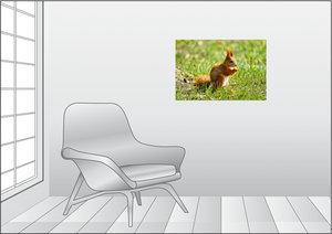 Premium Textil-Leinwand 75 cm x 50 cm quer Rotes Eichhörnchen au
