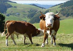 Hinterwälder - Die Kühe aus dem Schwarzwald