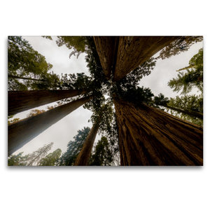 Premium Textil-Leinwand 120 cm x 80 cm quer Sequoia Nationalpark