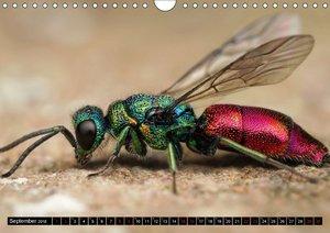 Faszination Makrofotografie: Wespen und Bienen (Wandkalender 201