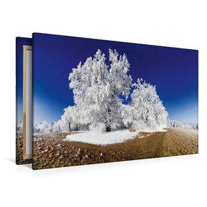 Premium Textil-Leinwand 120 cm x 80 cm quer Baum im Raureif bei