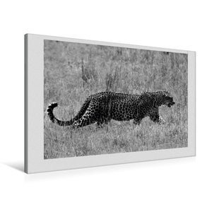 Premium Textil-Leinwand 90 cm x 60 cm quer Leopard auf Pirsch in