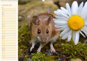 Grüsse von der Maus!