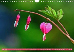 Ansichten mit Herz (Wandkalender 2020 DIN A4 quer)