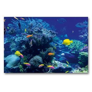 Premium Textil-Leinwand 90 cm x 60 cm quer Korallenriff