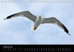 Amrum, Perle der Nordsee (Tischkalender 2020 DIN A5 quer)