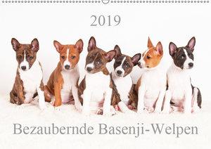 Bezaubernde Basenji-Welpen (Wandkalender 2019 DIN A2 quer)