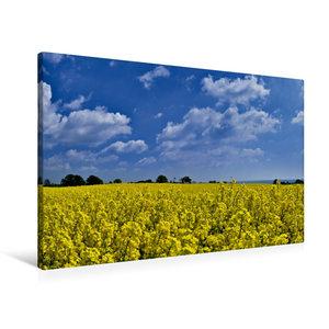 Premium Textil-Leinwand 90 cm x 60 cm quer Im Rapsfeld