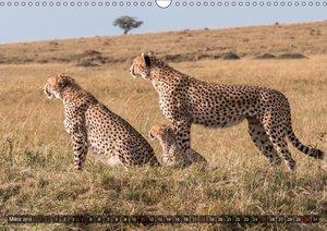 Geparde - Jäger der Savanne