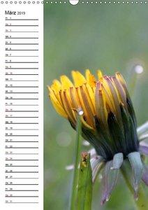 Der Löwenzahn / Geburtstagskalender (Wandkalender 2019 DIN A3 ho