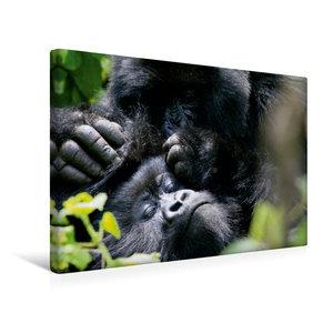 Premium Textil-Leinwand 45 cm x 30 cm quer Berggorillas - Körper