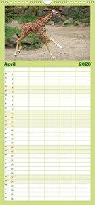 Kleine Schelme - Tierbabys - Familienplaner hoch (Wandkalender 2