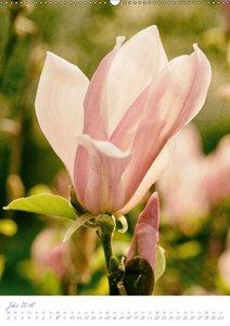 Zauberhafte Blüten im Garten