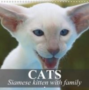 Cats - Siamese kitten with family (Wall Calendar 2015 300 × 300