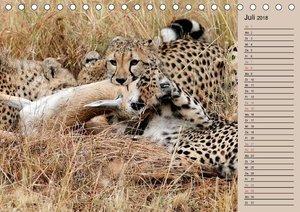 Geparden - Ein Leben in Afrika