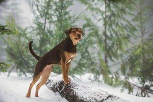 Die unglaublichen Abenteuer von Bella, 1 Blu-ray
