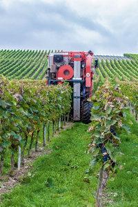 Premium Textil-Leinwand 30 cm x 45 cm hoch Weinlese, nicht nur m
