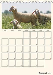 Merinolandschafe / Terminplaner (Tischkalender 2019 DIN A5 hoch)