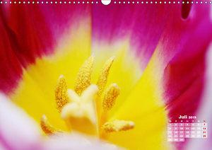 Tulpen, Tulips, Tulipes (Wandkalender 2019 DIN A3 quer)