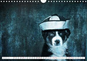 Hund trägt Hut