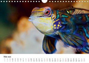 Fischzauber - Wundervolle Aquarienfische