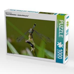 """Ein Motiv aus dem Kalender \""""Zarte Schönheiten - Libellen Malays"""