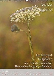Unkräuter - Nützliche Wildpflanzen auf der Wiese (Wandkalender 2