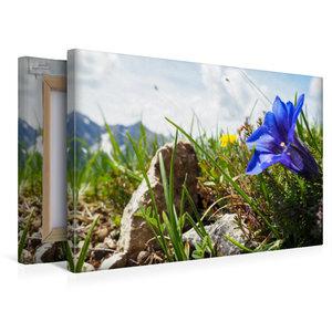 Premium Textil-Leinwand 45 cm x 30 cm quer Enzian, Fleischbank,