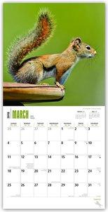 Squirrels - Eichhörnchen - Grauhörnchen 2018 - 18-Monatskalender
