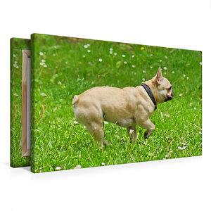 Premium Textil-Leinwand 75 cm x 50 cm quer Französische Bulldogg