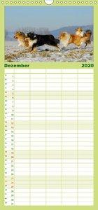 Faszination Collie 2020 - Familienplaner hoch (Wandkalender 2020