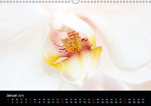 Traumblüten (Wandkalender 2019 DIN A3 quer)