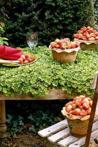 Premium Textil-Leinwand 50 cm x 75 cm hoch Erdbeerzeit