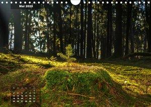 Zauberhafte Waldlandschaften