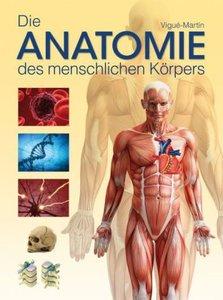 Die Anatomie des menschlichen Körpers