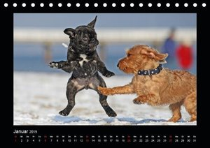 Allerlei Hundekinder (Tischkalender 2019 DIN A5 quer)