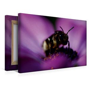 Premium Textil-Leinwand 45 cm x 30 cm quer Junge Biene im Blüten