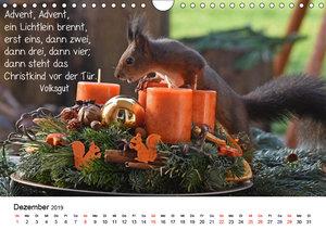 Der literarische Eichhörnchen-Kalender