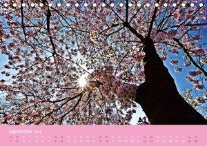 Zarte Kirschblüten - Berauschende Gedankendüfte